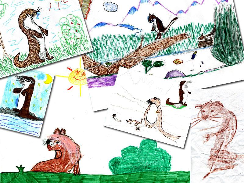 Alcuni disegni sulla lontra