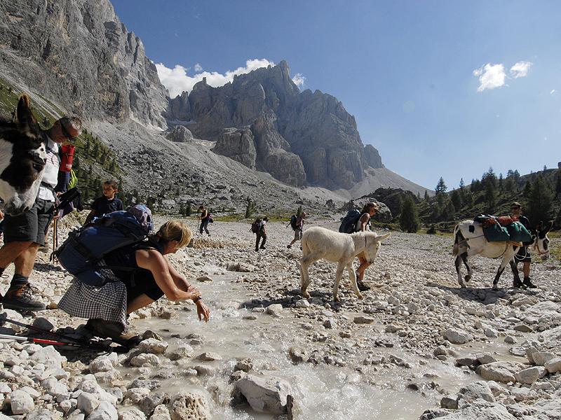 """Val Venegia, trekking con gli asini 2012 --- © Valentina Musmeci --- """"Dove pensano gli asini"""" www.dovepensanogliasini.it"""