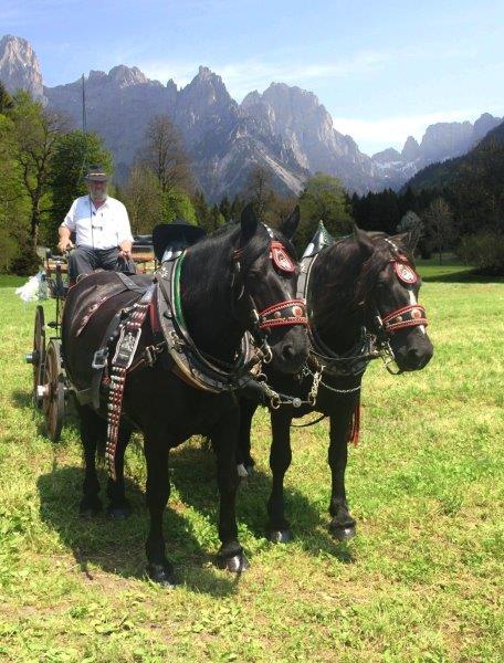 Carrozza con cavalli in Val Canali