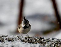 Ricerca sull'avifauna del Parco