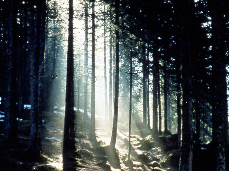 Dentro la foresta