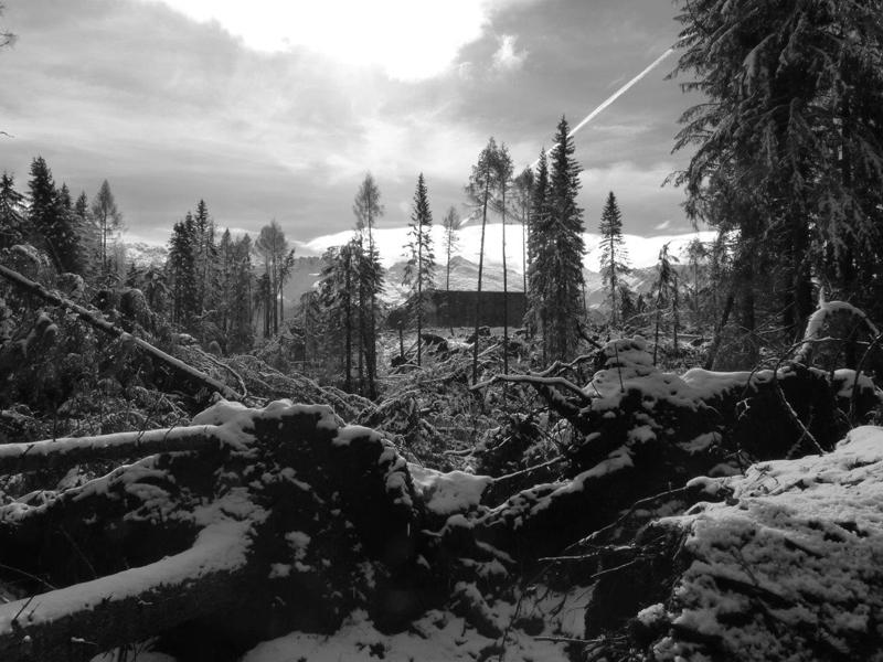 Distruzione del bosco a Paneveggio novembre 2018 - foto 3