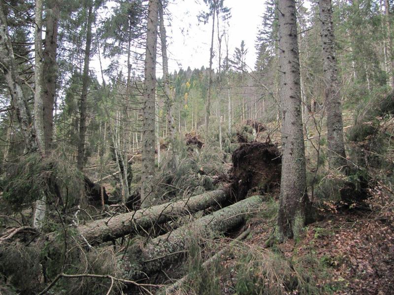 Distruzione del bosco in Val Canali novembre 2018 - foto 1