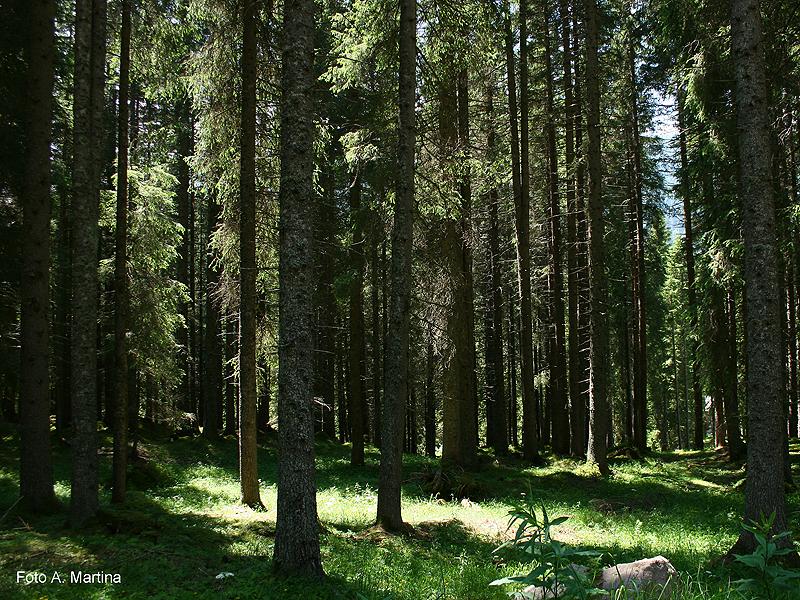 Foresta di Paneveggio