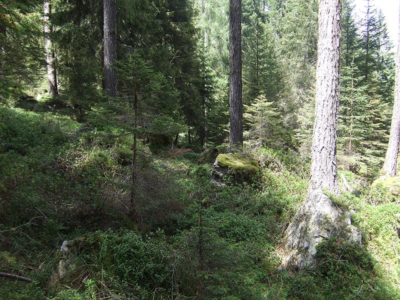 Fossernica: ambiente tipico del cedrone