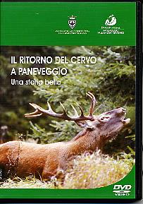 Il ritorno del cervo a Paneveggio. Una storia bella.