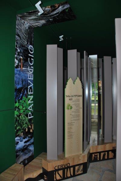 La sala dedicata alla Foresta di Paneveggio