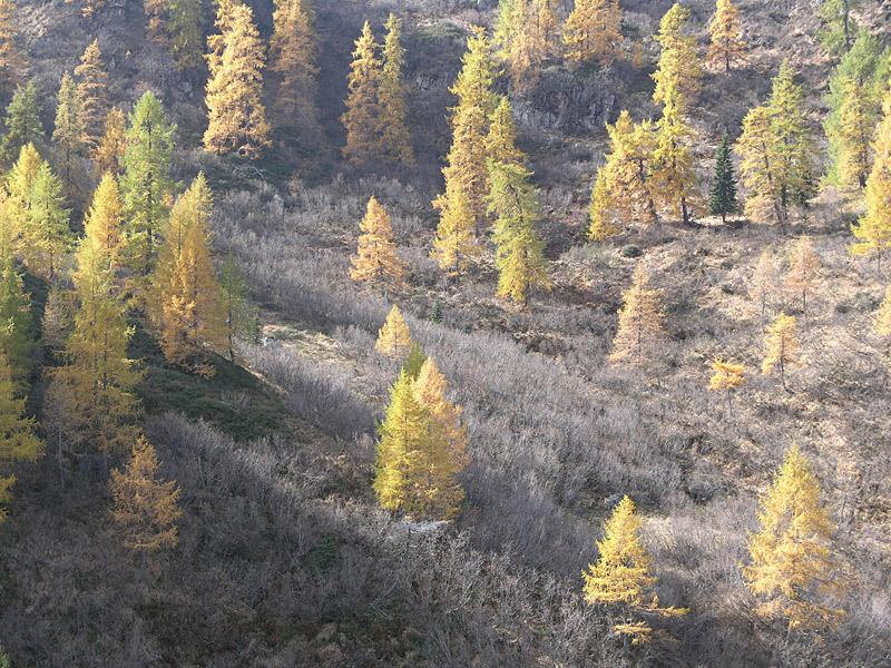 Le aree naturali protette come oggetto di confine