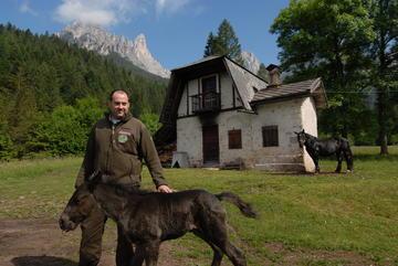 L'ultimo nato di razza Norica a Camp vicino a Villa Welsperg