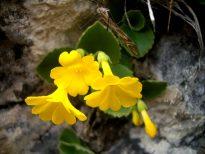 Ricerche floristiche e vegetazionali