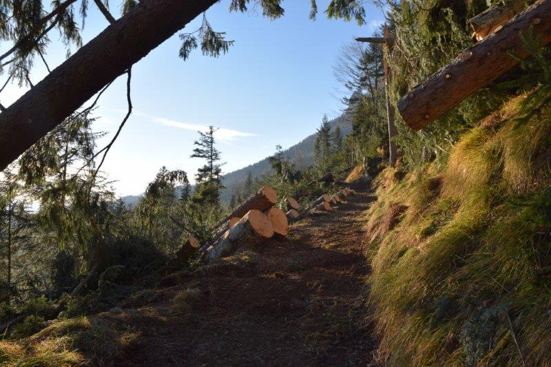 Riapertura di un sentiero in Val Canali