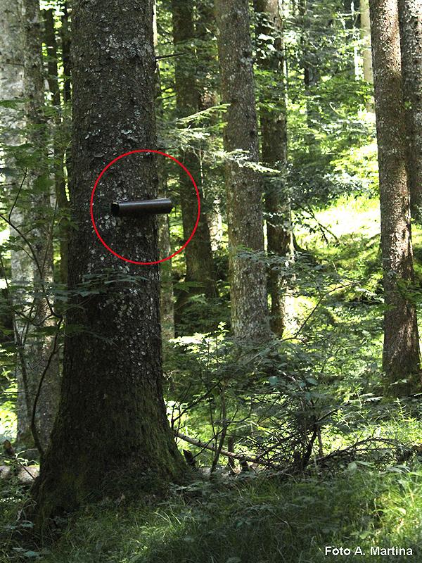 Trappola per lo studio dello scoiattolo - Foto A. Martina