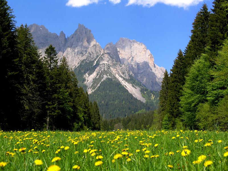 Val Canali con fioritura del trassaco