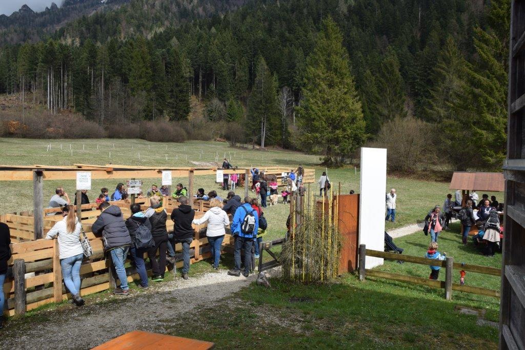 Primavera in Val Canali 2