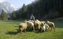 Progetto biodiversità Val Canali