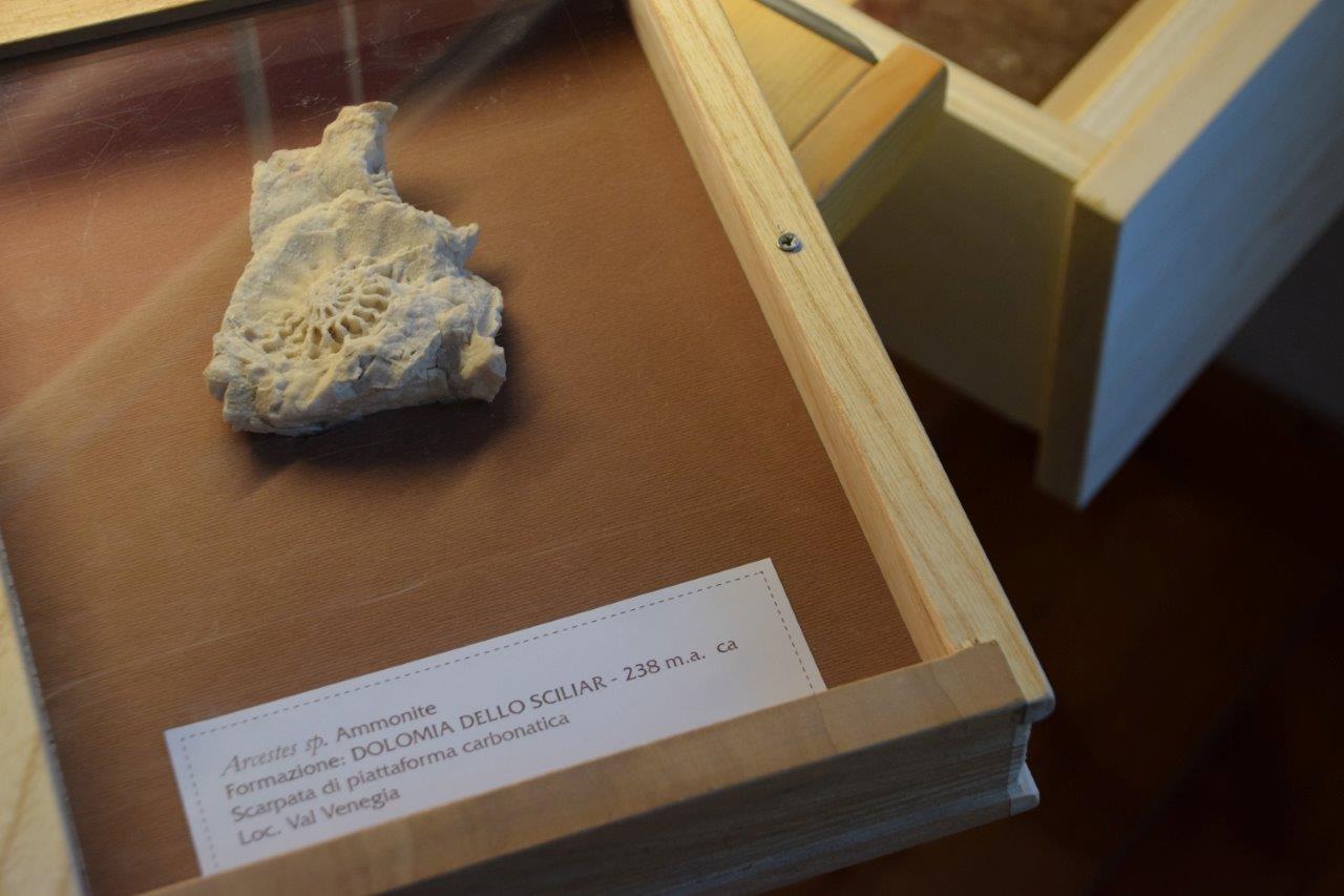 Biblioteca Fossili 1