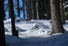 La ricerca e il monitoraggio del francolino di monte (Tetrastes bonasia)