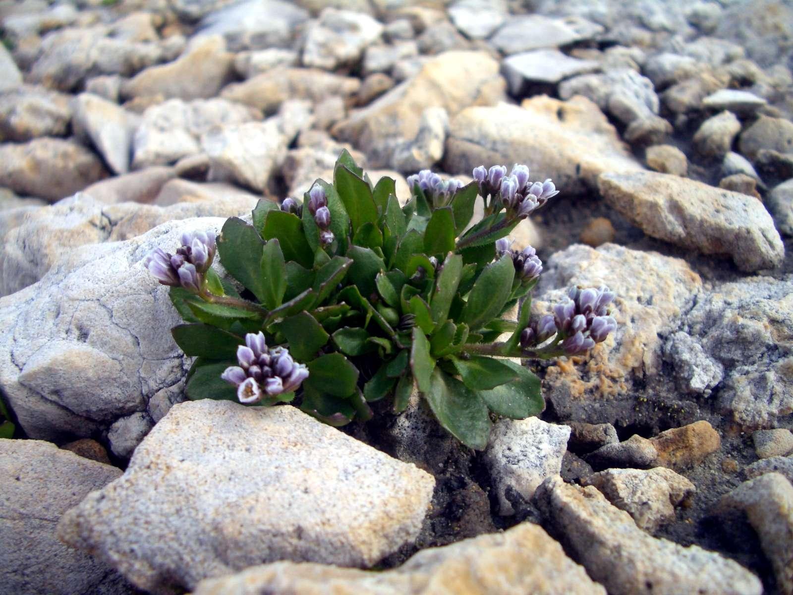 Il Diario vegetale, tra fiori e stagioni