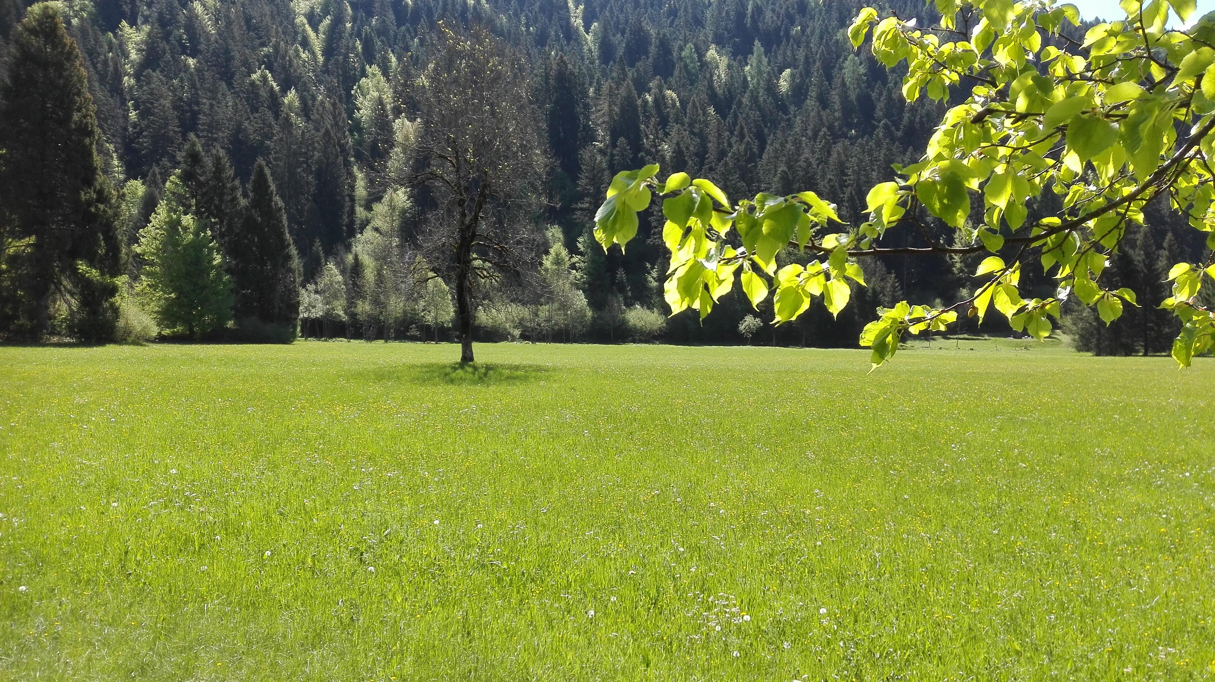 In cammino nei Parchi, domenica 13 giugno anche in Val Canali